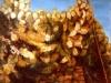 Siepe di cactus - olio su tela 50x60 - 1978