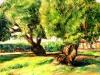 Ulivi nel giardino - olio su tela 40x50 - 2018